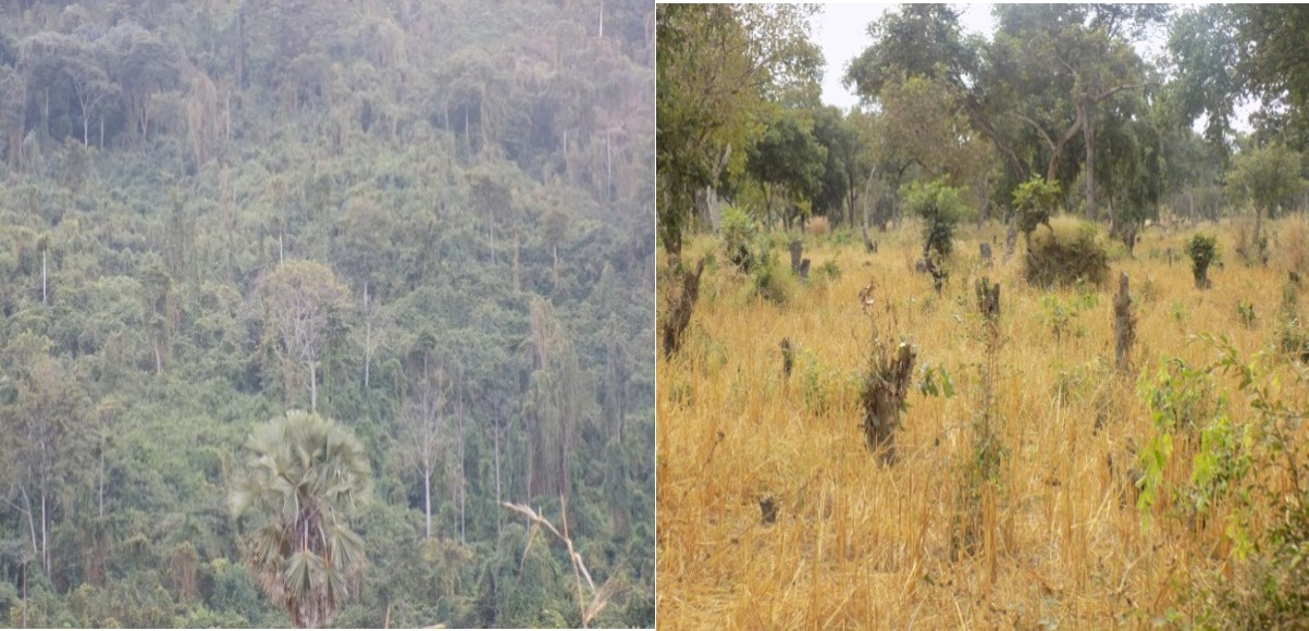 Protected and encroached Forest Reserve in Kilombero