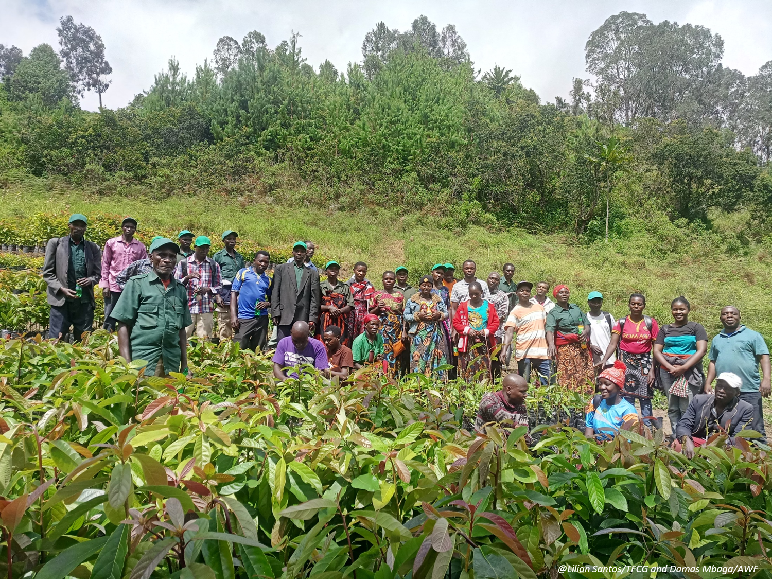 ABCG GCI reforestation activity in Mngeta Valley Tanzania organized the African Wildlife Foundation and the Tanzania Forest Working Group