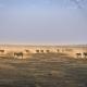 Zebras in Amboseli by Jordi Fernandez unsplash