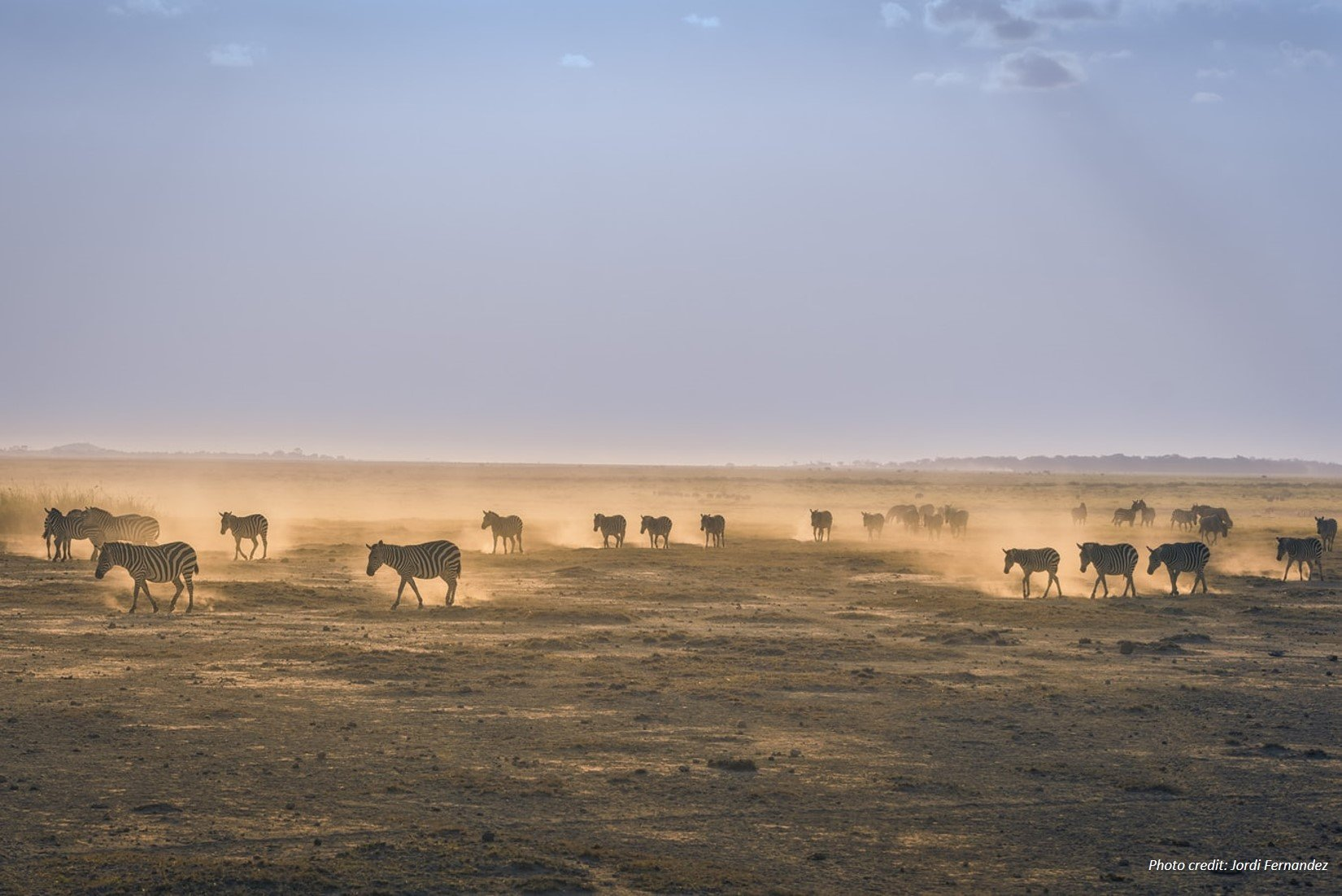Zebras in Amboseli by Jordi Fernandez unsplash