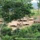Village view in the Kabobo Wildlife Reserve.Photo credit: Nyembo Paluku, WCS