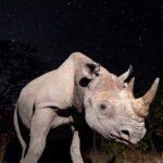 How Experts are Reversing the Rhino Population Decline in Serengeti