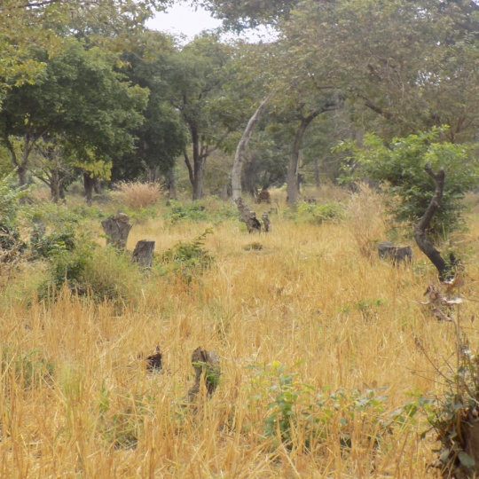 ABCG LRTR On going deforestation of Namwai Forest Reserve in Ihenga Village Tanzania