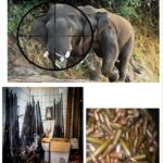Establishing Wildlife Crime Units to Boost the Fight Against Poaching and Illegal Wildlife Trade in The Congo Basin