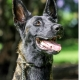 AWF illegal wildlife trade canine