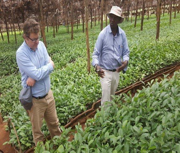 Tea seedlings nursery in Njombe region SAGCOT by FelixKamau_TNC