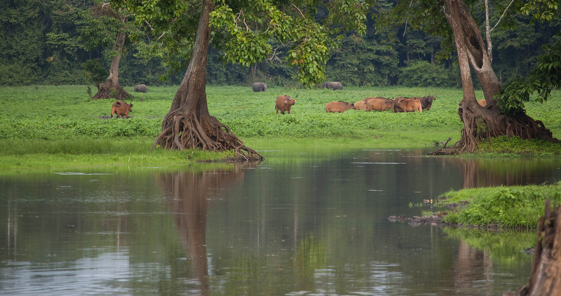 Loango NP Scene Gabon