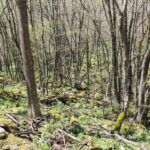 Community-Based Forest Management