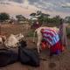 Milking livestock in northern Tanzania at dawn. Photo Credit Nick Hall