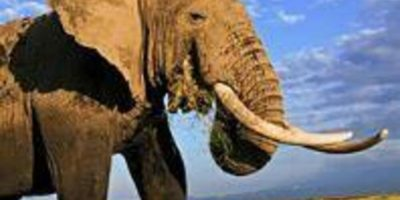 Consumer Demand for Elephant Ivory Remains in Decline, WWF's Fifth Annual Survey in China Finds_6177ff3351bfc.jpeg
